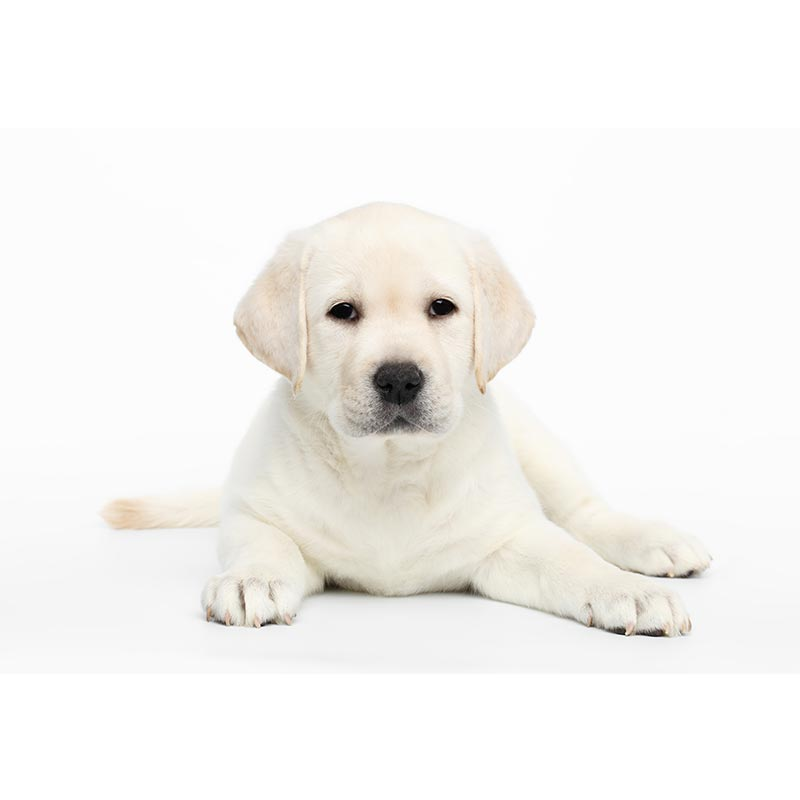 Champ-Richer (Champion) шампунь щенок