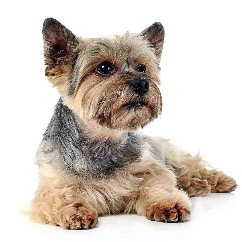Спрей Champ-Richer (Champion) для расчесывания собак
