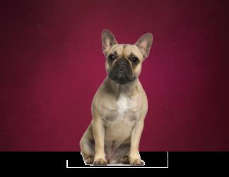 Preparaciones para peinar perros